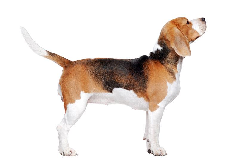 Ein Hund in seitlicher Aufnahme